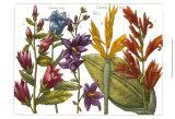 Printed Arena Botanical III Posters