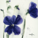 Pansies III Prints by  Marthe