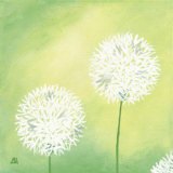 Dandelions III Prints by Sabine Mannheims