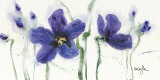 Pansies VIII Prints by  Marthe