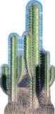 Cactus Group Cardboard Cutouts