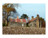 Those Ol' Cotton Fields Back Home Photographic Print by Jon Olson