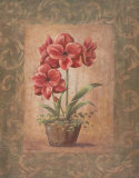 Wanda's Amaryllis I Prints by Vivian Flasch