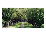 Oak Alley Plantation Photographic Print by Larry Powell