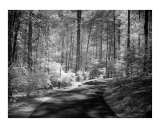 Callaway Gardens Georgia Shaded Path 2 Photographic Print by James Davidson