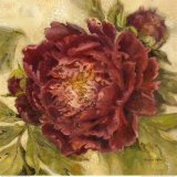 Scarlet Peony Prints by Kathryn White