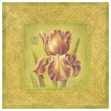 Golden Iris Detail Prints by Lauren Hamilton