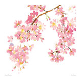 Pink Blossom Poster by Summer Thornton