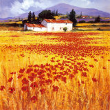 Coquelicots Art par Steve Thoms