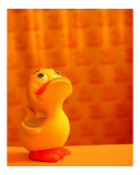 Happy Little Duckie Photographic Print by Steven Myers