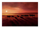 Zebu at Dusk Print by Jonathan Sanders