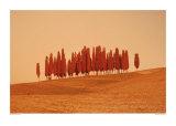 Sunset, Tuscany Kunstdrucke von W. Krecichwost