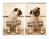 Pugsy Malone Art par Jim Dratfield