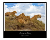 Serengeti Lions Photographic Print by J Wayne Pinkston