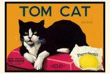 Tom Cat Lámina maestra