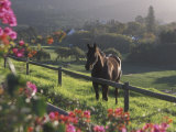 Constantia Winery, Cape Town, South Africa Photographic Print by Stuart Westmoreland