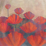 Poppies II Prints by Robert Holman