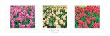 Tulip Panel Prints by Bent Rej