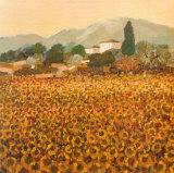 Late Summer, Tuscany Print by Hazel Barker