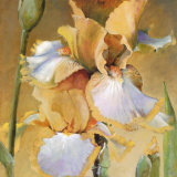 Golden Iris II Prints by Dennis Carney