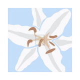 Lily Blue Print by Emily Burrowes
