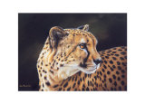Cheetah Art by Kim Thompson