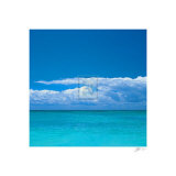Tropical Waters II Prints by Adam Brock