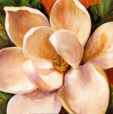 Magnolia Glow II Poster by Liv Carson