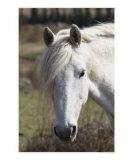 Closeup of a Horse's Eye Photographic Print by Igor Kharlamov