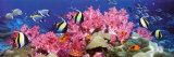 Tropische vissen Poster