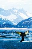 Humpback Whale Prints