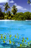 Tropical Scenery II Prints