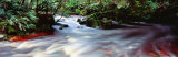 Bird River, Tasmania, Australia Photographic Print by  Panoramic Images