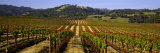 Vineyard, Geyserville, California, USA Photographic Print by Panoramic Images