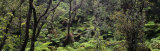 High Angle View of Trees in a Rainforest, Hawaii Volcanoes National Park, Hawaii, USA Photographic Print by  Panoramic Images