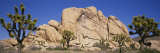 Low Angle View of Trees and Rocks in a Park, Joshua Tree National Monument, California, USA Photographic Print by  Panoramic Images