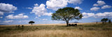 Elephants, Kenya, Africa Photographic Print by  Panoramic Images