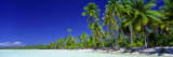 Beach with Palm Trees, Bora Bora, Tahiti Photographic Print by  Panoramic Images