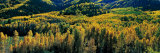Autumn Aspens, Colorado, USA Photographic Print by  Panoramic Images