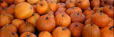 Pumpkins Photographic Print by  Panoramic Images