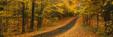 Autumn Road, Emery Park, New York State, USA Photographic Print by  Panoramic Images
