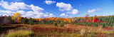 Autumn Foliage, New York State, USA Photographic Print by  Panoramic Images