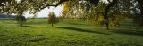 Trees in a Field, Aargau, Switzerland Photographic Print by Panoramic Images 