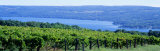 Vineyard, Finger Lakes, New York, USA Photographic Print by Panoramic Images