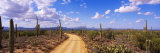 Road, Saguaro National Park, Arizona, USA Lámina fotográfica por Panoramic Images
