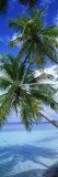 Maldiverna Fotografiskt tryck av Panoramic Images,