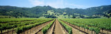 Napa Valley Vineyards Hopland, CA Lámina fotográfica por Panoramic Images,