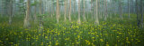 Pond, Cypress Trees, Tall Milkwort Plants, Flowers, Antioch Church Bay, North Carolina, USA Photographic Print by  Panoramic Images
