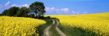 Canola, Farm, Yellow Flowers, Germany Fotoprint van Panoramic Images,
