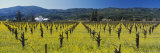 House in a Vineyard, Napa Valley, California, USA Photographic Print by  Panoramic Images